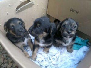 cuccioli gettati nel cassonetto