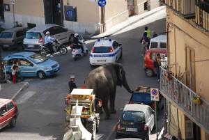 elefante città