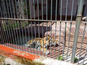 Zoo-di-Napoli